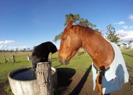 cat-morris-horse-champy-animal-friendship-2