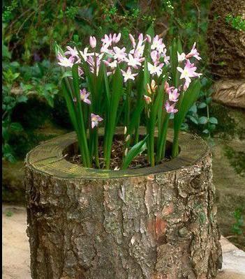 цветы в пне